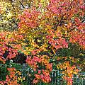 Pallette Of Fall Colors by Kenny Glover