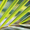 Palm Leaves Pattern by Konstantin Sutyagin