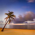 Palm by Scott Meyer