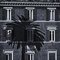Palm Tree by David Pringle