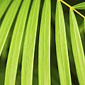 Palm Tree Leaf by Elena Elisseeva