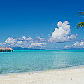 Palm Tree On The Beach, Moana Beach by Panoramic Images