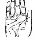 Palmistry Chart, 1885 by Granger