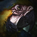 Parrot 9 by Ingrid Smith-Johnsen