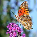 Passion Butterfly by Stacy Egnor