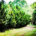 Path by Carolina Mendez
