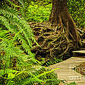 Path In Temperate Rainforest by Elena Elisseeva