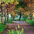 Pathway Through Colorful Forest In Fall Autumn by Ken Biggs