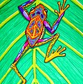 Peace Frog by Nick Gustafson