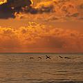 Pelican Sunrise by  Island Sunrise and Sunsets Pieter Jordaan