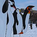 Penguins by Steven Ralser