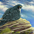Peregrine Falcon by Catherine Garneau