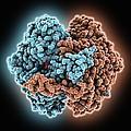 Phosphoglucose Isomerase Molecule by Science Photo Library