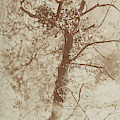 Photograph Of A Tree by British Library