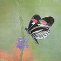 Piano Key Butterfly1 by Kim Hojnacki