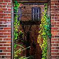 Picture Window by Robert Mullen