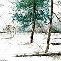 Pine Woods by Steven Schultz