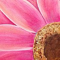Pink Daisy by David Cotton