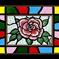 Pinkish Rose by Jim Harris