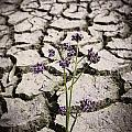 Plant Growing Through Dirt Crack During Drought   by Jorgo Photography - Wall Art Gallery
