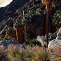 Plants On Landscape, Anza Borrego by Panoramic Images