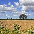 Ploughed Field by Julia Gavin