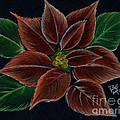 Poinsettias  by Bill Richards