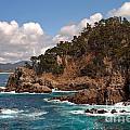 Point Lobos by Charlene Mitchell