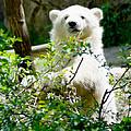 Polar Bear Cub  by Tracy Winter