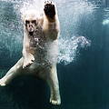 Polarbear In Water by Henrik Sorensen