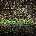 Pond Reflection by Madeline Ellis