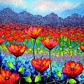 Poppy Vista by John  Nolan
