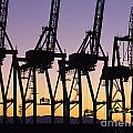Port Of Seattle Cranes Silhouetted by Jim Corwin