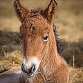 Portrait Of Newborn Foal by Panoramic Images