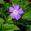 Pretty Purple Pinwheel by Kim Pate