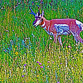 Pronghorn Among Wildflowers In Custer State Park-south Dakota by Ruth Hager