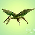 Pterodactyl, Cretaceous Dinosaur by Spencer Sutton