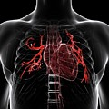 Pulmonary Arteries by Sciepro/science Photo Library