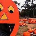 Pumpkin Patch by Bob Pardue
