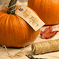 Pumpkins For Thanksgiving by Amanda Elwell
