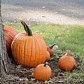 Pumpkins by Jim DeLillo