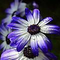 Purple Flower by Barbara Walsh