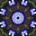 Purple Iris Kaleidoscope by Kathy Clark
