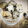 Quail Eggs by Elena Elisseeva