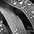 Raindrops On Grass Blades by Elena Elisseeva