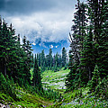 Rainer Glacial Meadow by Allen Biedrzycki