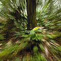 Rainforest Andes Mountains Ecuador by Pete Oxford