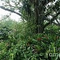 Rainforest At Ys River by Olaf Christian
