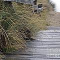 Rainy Day by Inge Riis McDonald