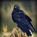 Raven by Yulia Kazansky